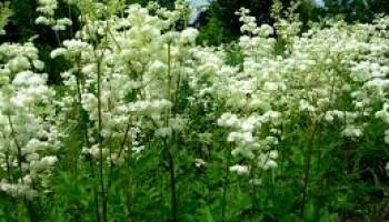 Biljke koje vole vlazna mesta