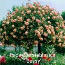 """""""Bessy"""" padajuca stablasica"""